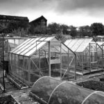 Middleport Allotments