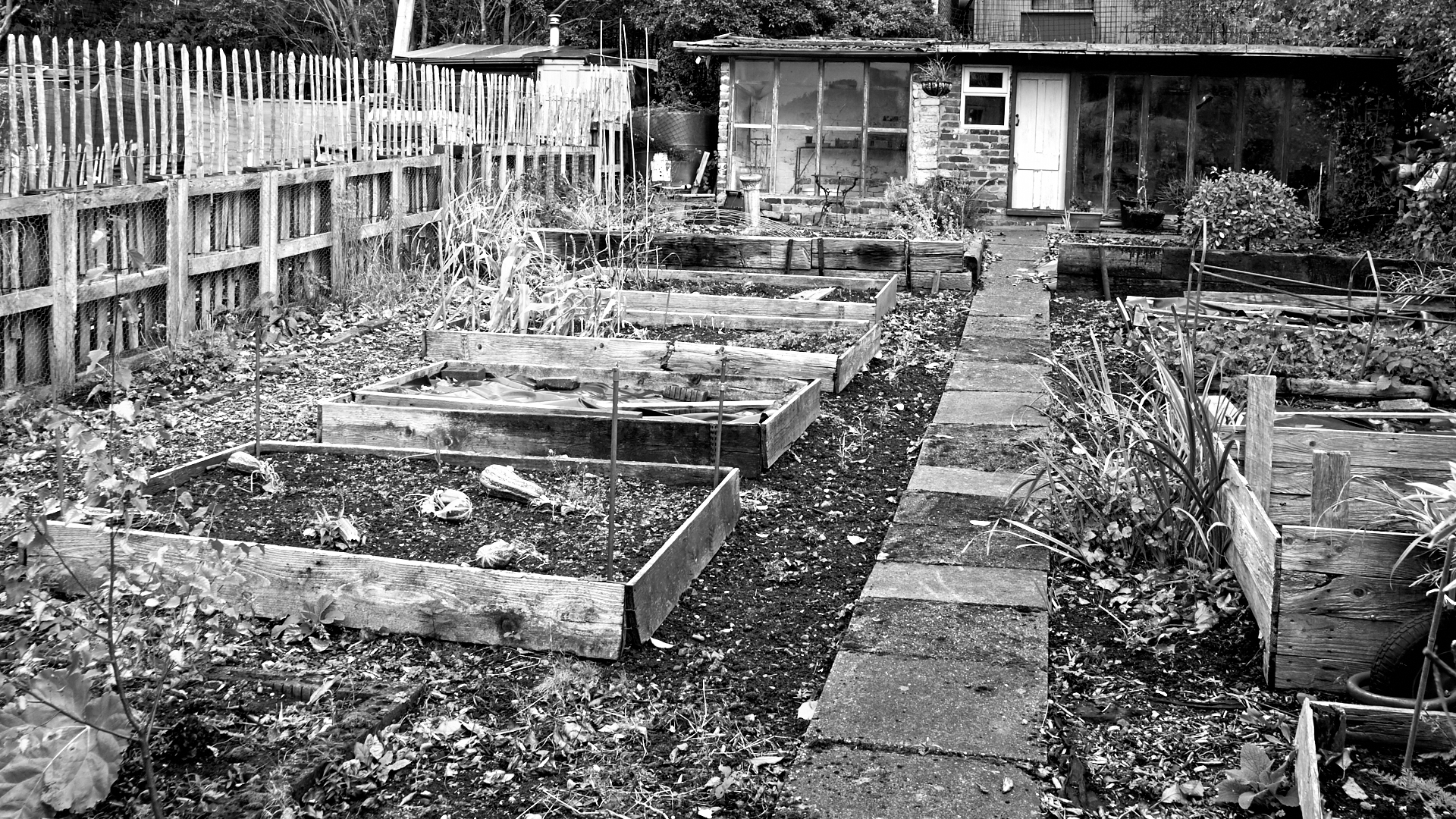 Middleport Allotments b 29
