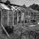 Middleport Allotments c 24