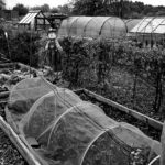 Middleport Allotments j 26